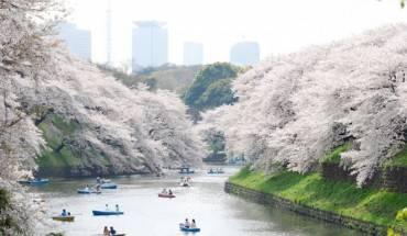 Dạo thuyền trên hồ ngắm hoa anh đào ở công viên Ueno.
