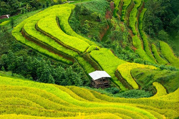 Những thửa ruộng bậc thang ở Hoàng Su Phì, Hà Giang, Việt Nam.