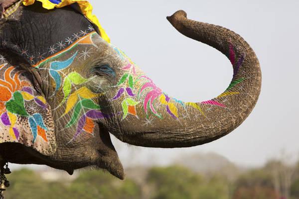Lễ hội bắt đầu với cuộc diễu hành của đàn voi trong trang phục truyền thống lộng lẫy.
