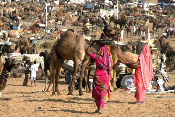 Khung cảnh nhộn nhịp của lễ hội Pushkar Camel Fair.