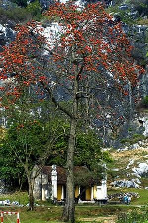 Loài hoa quen thuộc của làng quê Bắc Bộ.