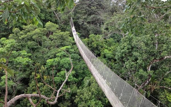 Khám phá khu rừng rậm nhiệt đới Amazon là một trong những trải nghiệm đáng nhớ nhất