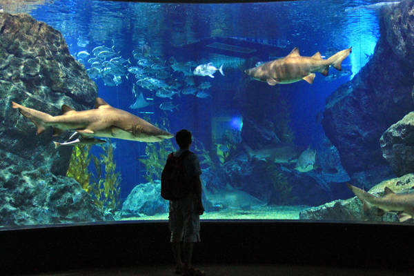 Siam Ocean World là thủy cung lớn nhất Đông Nam Á.