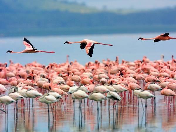 Khu du lịch sinh thái ở Kenya.