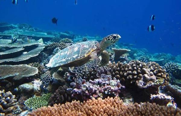 141231_TRA_AThiên đường nghỉ dưỡng ở Maldives đã nổi tiếng khắp thế giới. ugust_MaldivesTurtle