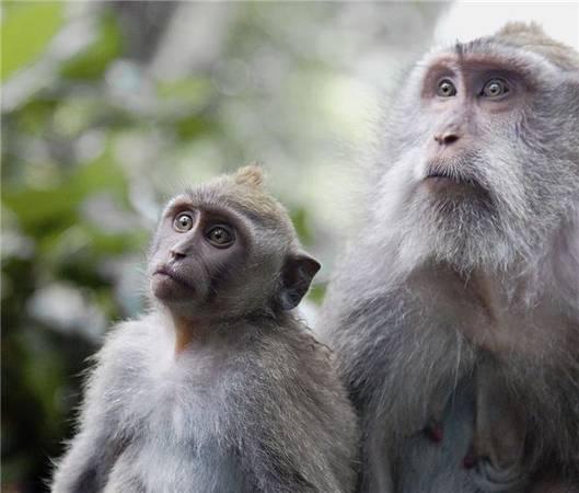 Rừng khỉ Ubud là nơi bạn sẽ ghi lại được những khoảnh khắc đẹp đến khó tin.