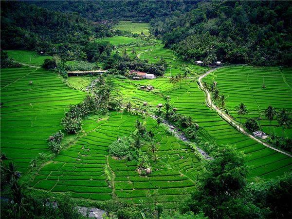 Du khách càng đi xa khỏi những điểm du lịch đông đúc thì những điều bạn nhận được sẽ càng tuyệt vời hơn, và việc nhìn thấy những cánh đồng lúa ở Ubud là một ví dụ điển hình.