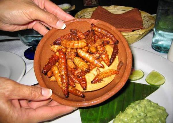 Sâu agave được tìm thấy trong các chai rượu tequila hoặc mezcal. Chúng thường được ngâm trong rượu hay chế biến thành món ăn đặc biệt ở Mexico.