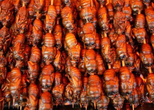 Nhộng ve sầu mới lột xác mềm và ngọt, được dùng làm món nhậu ở các nước châu Á như Việt Nam, Trung Quốc, Nhật Bản, Malaysia.
