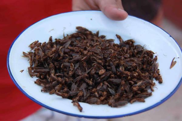 Kiến chiên: Kiến là loài côn trùng ăn được phổ biến nhất trên Trái Đất chỉ sau châu chấu. Ở Colombia, kiến chiên còn được bán ở rạp chiếu phim thay cho bắp rang bơ. Các nước Mexico, Australia, Nam Phi cũng ưa chuộng món ăn từ kiến.