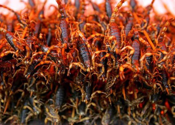 Ở nhiều nước như Thái Lan, Trung Quốc, bọ cạp thường được chiên lên, ăn giòn và có vị như thịt cua vỏ mềm.