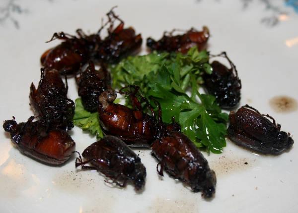 Bọ da (June bug) thường được thổ dân châu Mỹ rang, nướng trên than nóng để ăn. Món côn trùng này giờ đã phổ biến ở nhiều nơi khác.
