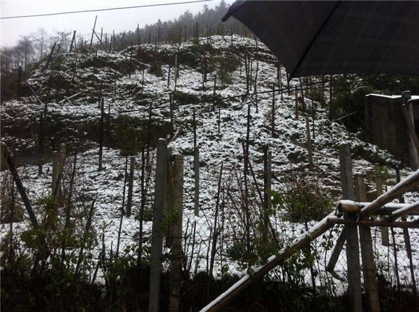 Tuyết phủ khắp nơi.
