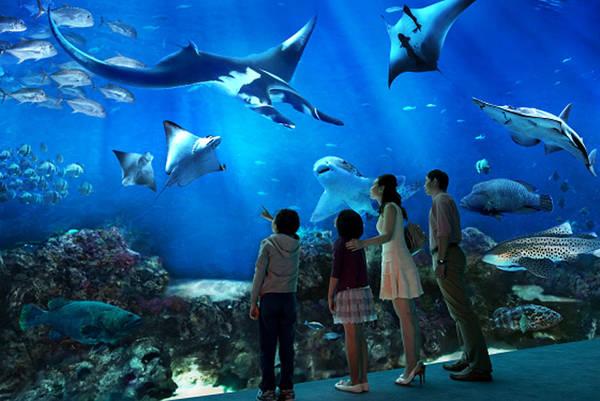 Tham quan khu đại dương nhân tạo S.E.A Aquarium lớn nhất thế giới.