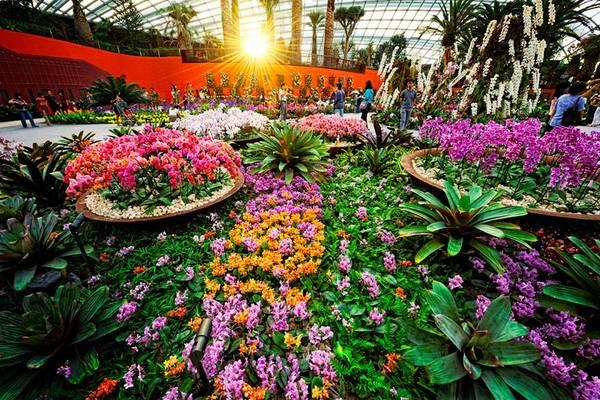 Flower Dome là một trong những khu vườn nhà kính lớn nhất thế giới.