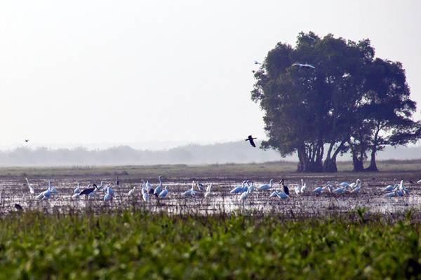 Vườn quốc gia Tràm Chim với diện tích gần 7.000 hecta cũng là khu dự trữ sinh quyển Ramsar thứ 4 của Việt Nam