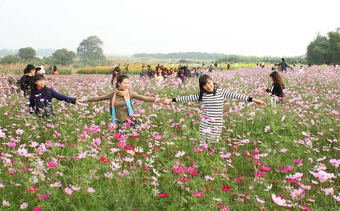 Rất đông bạn trẻ tìm tới vườn hoa bãi đá sông Hồng để lưu lại khoảnh khắc đẹp.