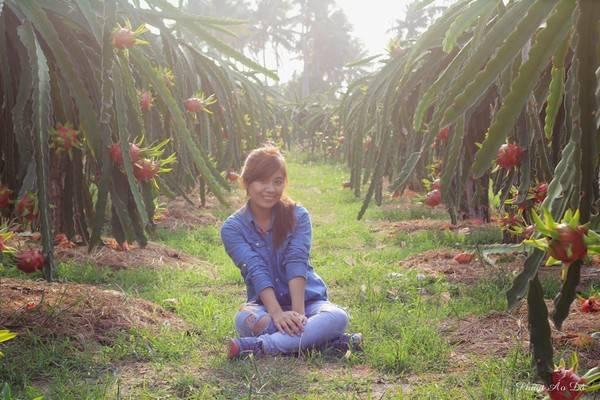 Trên đường đi Phan Thiết, bạn cũng có thể ghé vào vườn thanh long sai quả