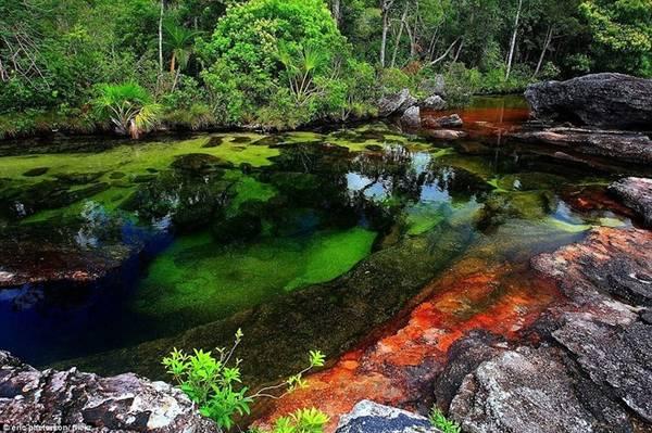 Màu cây hòa với màu xám của đá và màu xanh trong vắt của nước.
