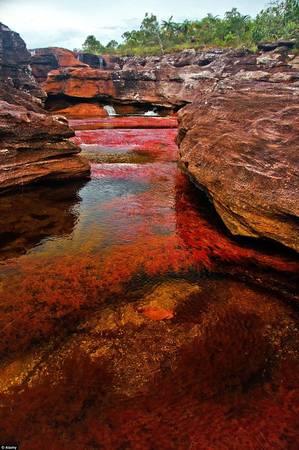 Màu cây khiến cho dòng nước đỏ rực.
