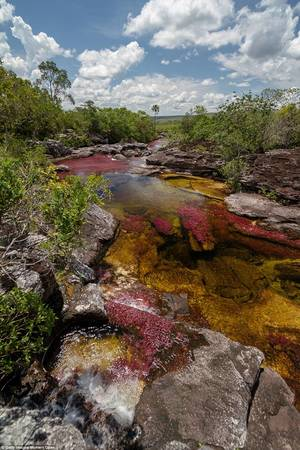 Làn nước trong vắt cho du khách cơ hội quan sát điều tạo nên màu sắc cho sông Caño Cristales.