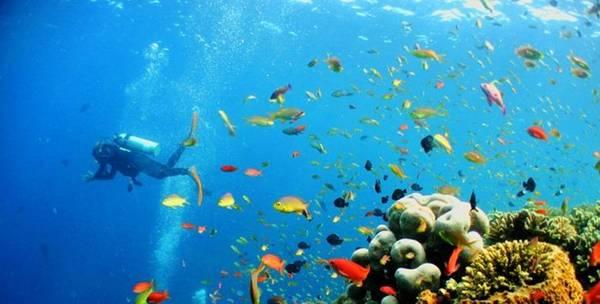 Lặn biển là môn thể thao khá thịnh hành ở những vùng biển nhiều san hô như Nha Trang, Cù Lao Chàm, Quy Nhơn… Khi tham gia, bạn sẽ được trang bị đồ nghề chuyên nghiệp như một thợ lặn gồm quần áo lặn, kính mắt, ống thở, bình hơi cùng dây nịt bằng chì. Chi phí cho một vòng lặn 30 phút khoảng 500.000-600.000 đồng. Ngoài ra còn có dịch vụ chụp ảnh lặn cho du khách với giá 200.000 đồng/10 kiểu.