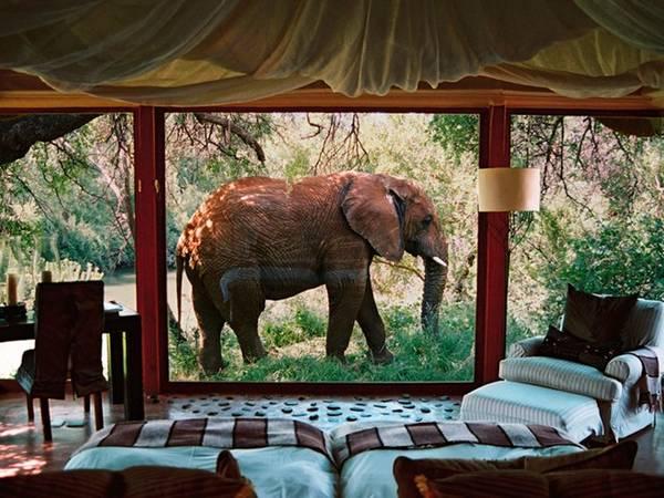 Khu nghỉ dưỡng Makanyane, Madikwe Game Reserve, Nam Phi