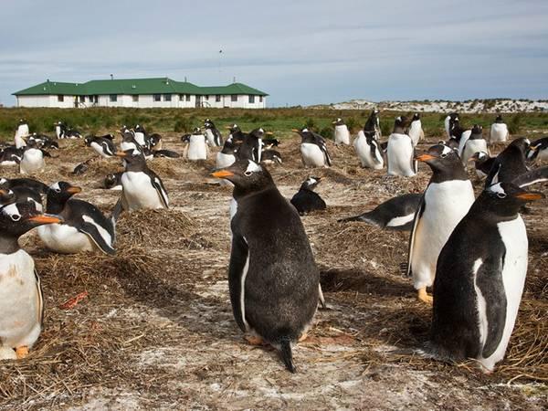 Khách sạn Sư Tử Biển, Falkland