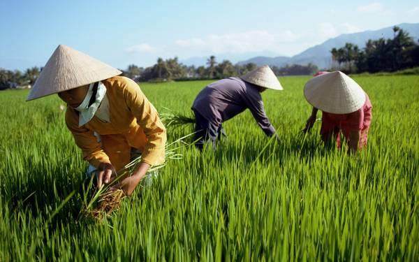 Huế là nơi nổi tiếng tại Việt Nam với những chiếc nón bài thơ độc đáo.