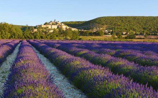 17. Provence, Pháp