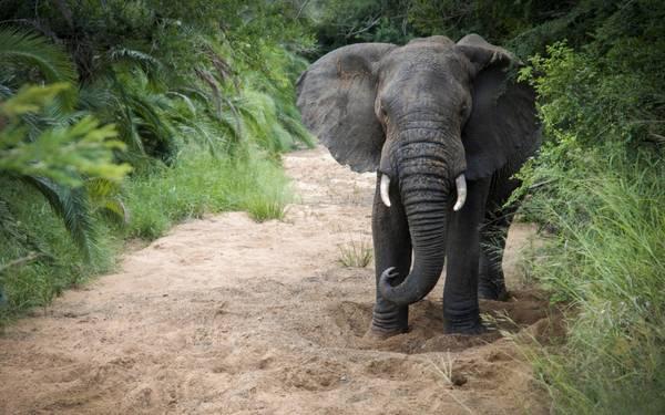 4. KwaZulu-Natal, Nam Phi
