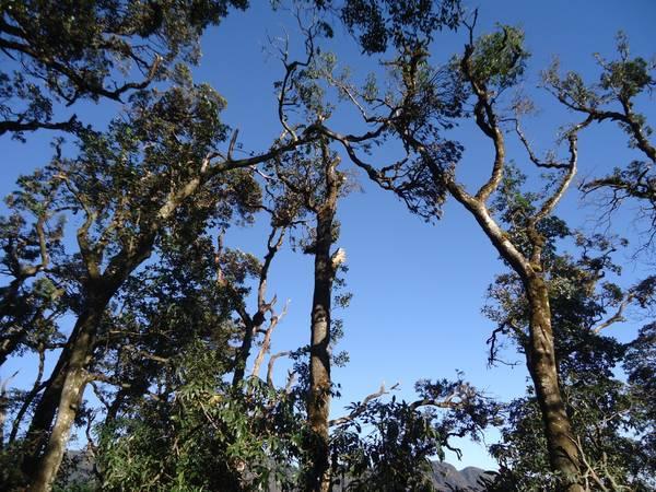 Nét hoang sơ còn sót lại của rừng Hoàng Liên.