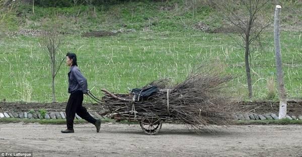 Các du khách nước ngoài được ở trong làng, nơi người dân nhặt củi, hái hoa và thu hoạch thức ăn.