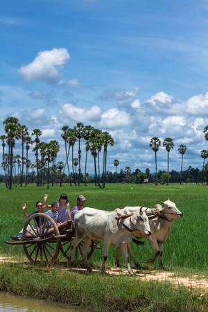 Du khách rất thích thú với những trải nghiệm dân dã cùng người dân địa phương.