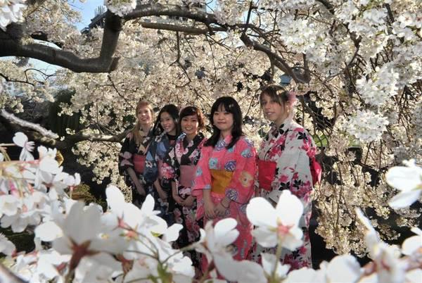 Các thiếu nữ e ấp trong bộ trang phục Kimono truyền thống tham gia vào lễ hội. Ảnh: odt.co.nz