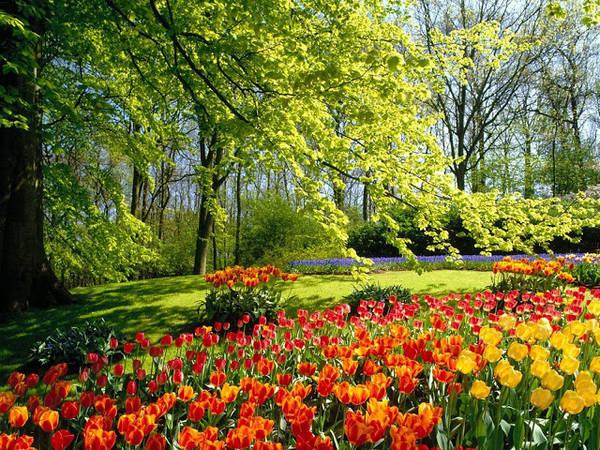 Tháng 4 được xem là thời điểm thích hợp nhất để du lịch Anh. Ảnh: 3dwallpaperbox.blogspot.com