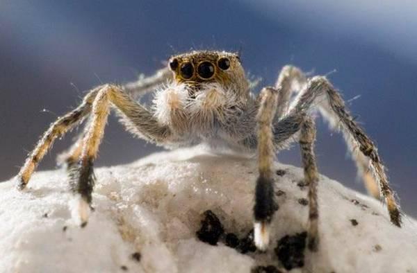 Ngay cả khi ở trên cao với không khí loãng, ta vẫn không thể thoát khỏi loài nhện