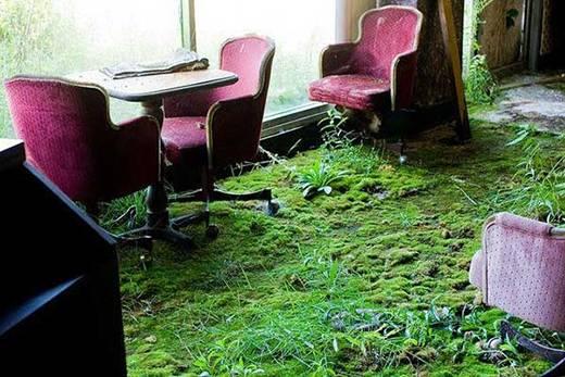 Những thảm rêu xanh rì đã che phủ một cửa hiệu bị bỏ hoang ở Youngstown, Ohio.