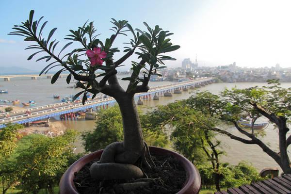 Cảnh đẹp nhìn từ Tháp Bà Ponagar. Ảnh: Alexinwanderland