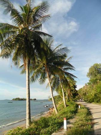 Description: Những hàng dừa trên đảo được trồng dọc theo con đường ven biển rất đẹp. Ảnh: Dongdiephuyen
