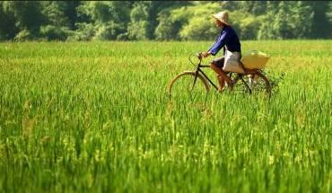 Mộtngười nông dân đang chạy xe trên cánh đồng lúa. Ảnh: Jon Sanwell/ flickr.com