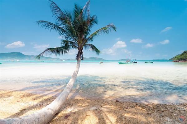 """Cây dừa """"huyền thoại"""" trên đảo Nam Du."""