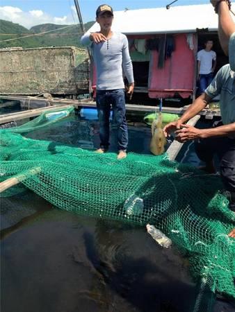 Nếu bạn có thời gian nhiều để tham quan thì có thể chuẩn bị dụng cụ để câu cá trên những hốc đá hay trên những chiếc bè nuôi tôm, cá của ngư dân. Ảnh: Pan Xê