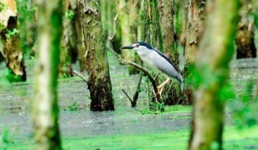 Hệ thực vật và các loài chim quý ở Trà Sư. Ảnh: ST