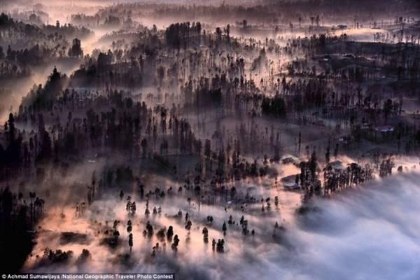Theo Daily Mail, ngày 30/6 là thời hạn hết nhận ảnh dự thi. Ban Tổ chức cho biết điểm nổi bật của cuộc thi ảnh du lịch năm nay là nhận được rất nhiều bức ảnh được chụp từ trên cao cho thấy được vẻ đẹp tầm nhìn toàn cảnh ở chủ đề Ngoại cảnh. Bồng bềnh sương mù phủ rừng cây tại thị trấn Cemoro Lawang (Indonesia) trong bình minh . Ảnh: Achmad Sumawijaya/National Geographic.