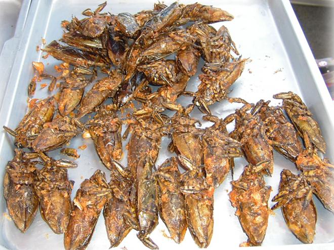 <strong>Bọ nước khổng lồ: </strong>Những con côn trùng này ăn mọi thứ, kể cả đồng loại. Ở một số khu vực châu Á, người dân bắt bọ nước, bỏ vỏ và đem rán giòn hoặc nướng. Nhiều người còn nghiền chúng ra và dùng như một gia vị, ví dụ như sốt Nam Prik của Thái Lan. Tuy có tên là bọ nước khổng lồ, chúng chỉ có kích cỡ tương đương với loài gián và có vị như sò điệp.
