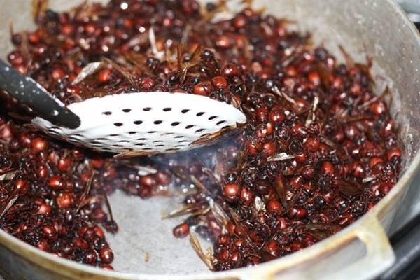<strong>Kiến khổng lồ: </strong>Những con kiến khổng lồ ở Colombia được nướng trong nồi sành và phủ chocolate của Bỉ, đem lại vị béo ngậy và rất nhiều protein. Loại kiến này được thu hoạch vào những ngày mưa mùa xuân và là một trong những đặc sản hiếm nhất thế giới.