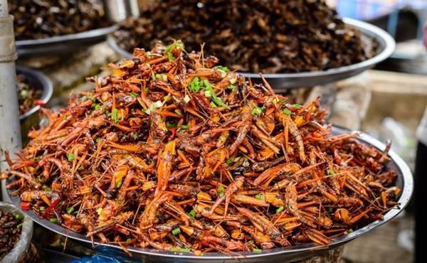<strong>Châu chấu: </strong>Phần lớn các quốc gia coi chúng là một loài phá hoại mùa màng, nhưng một số nơi lại dùng châu chấu như thực phẩm. Họ bắt châu chấu để làm nhiều món ngon như rán, nướng, nhúng chocolate. Nhiều người sẵn sàng chi tiền để được thưởng thức hương vị của loài côn trùng này tại các nhà hàng.