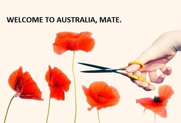 """<strong>2. Hội chứng Tall Poppy: </strong>Những ai thành công thường gặp 2 kiểu người: người hâm mộ và kẻ ghen ghét. Australia có một thuật ngữ dành riêng cho kiểu người thứ 2, đó là """"Hội chứng Tall Poppy"""" - những người chuyên chỉ trích các biểu tượng thành công được coi là hình mẫu của Australia."""