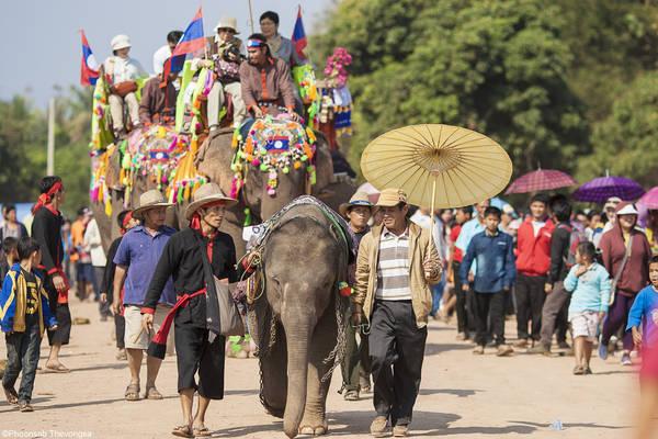 Voi là biểu tượng gắn với đời sống tâm linh và sinh hoạt hàng ngày của người dân Lào. Ảnh: laorock.wordpress.com